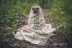 Je vous donne ici quelques conseils pour renforcer votre système immunitaire afin d'éviter de tomber malade cet hiver