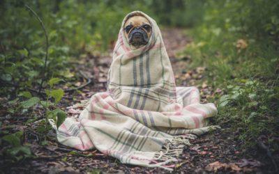 7 conseils pour ne pas tomber malade cet hiver